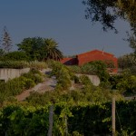 The winery – daring in its clear square lines – is hidden within the hill's natural change of level, so on the surface only the garden with fruit trees and herbs which covers it is visible.
