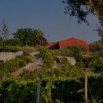 La cantina – pur audace con le sue linee nette e squadrate - è nascosta dentro un naturale dislivello della collina, così che in superficie resta visibile solo il giardino di alberi da frutto ed erbe aromatiche che la ricopre.