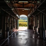 The ground floor, with its fermentation vats, faces directly onto the vineyards and the lake.