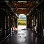Il piano terra, con le vasche di fermentazione, si affaccia direttamente sui vigneti e sul lago.