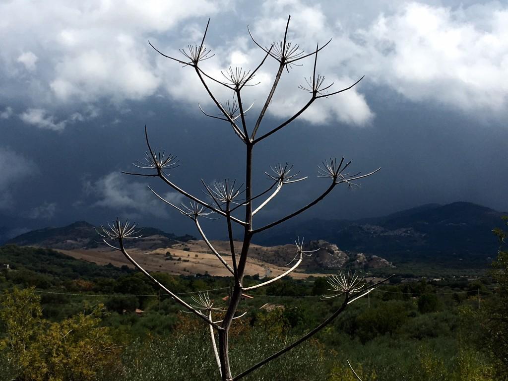 Etna, Monte Mojo