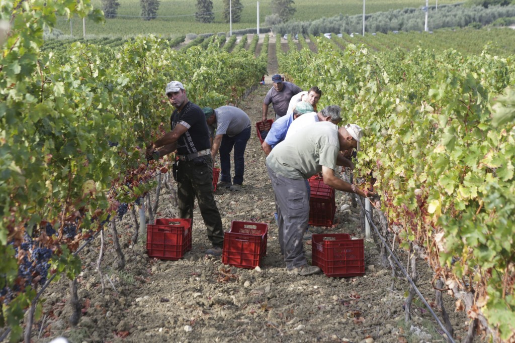 Dispensa, la vendemmia