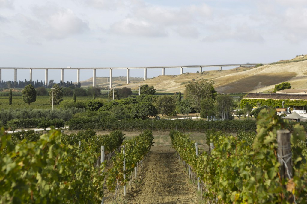 Dispensa, the vineyard of Cabernet Sauvignon which produces Planeta's Burdese